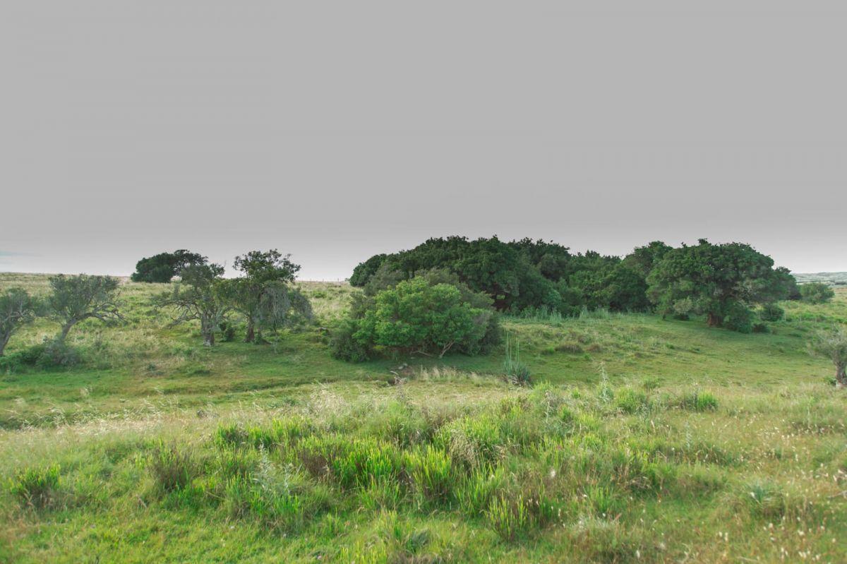Campo Ref.280 - Muy buen campo Agrícola Ganadero a 28 Kms. de San carlos