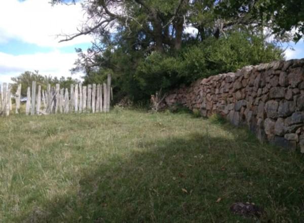 campo 35 has en los caracoles - col5153p