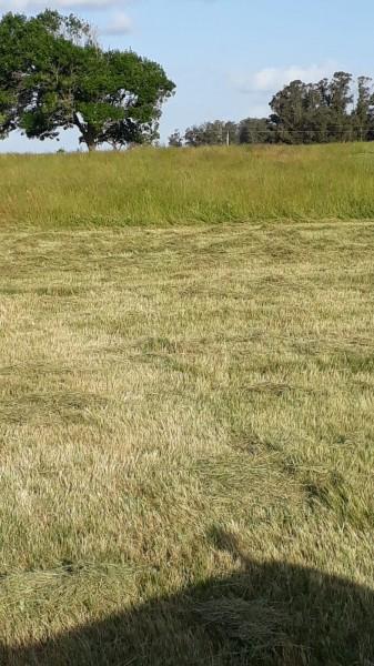 Chacra ID.6209 - Hermosa Chacra rodeada de verde y a minutos de la ciudad.