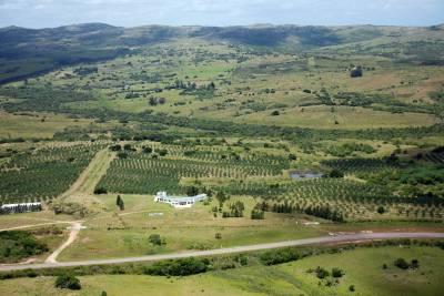 Campo apto fraccionamiento con plantación de olivos y fábrica de aceite de oliva muy acreditado