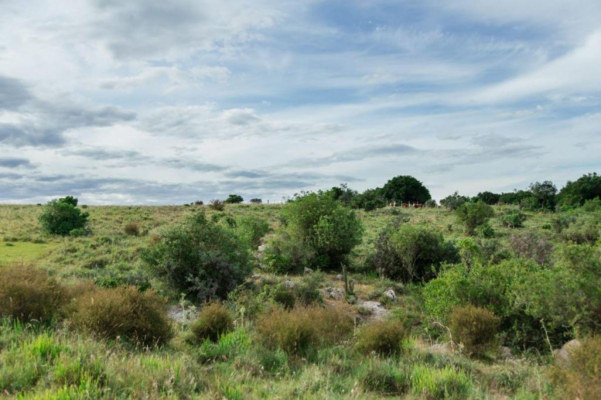 Campo Ref.376 - Campo ganadero de 411 hectáreas