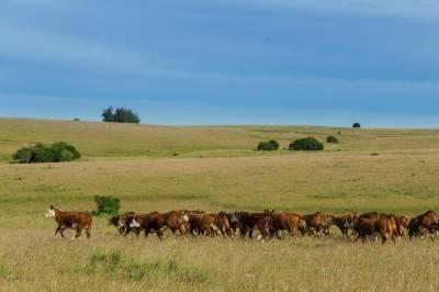 Campo ganadero de 411 hectáreas