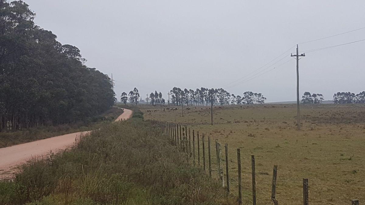 Chacra ID.371 - Chacra en zona rural de Jose Ignacio camino las Portuguesas