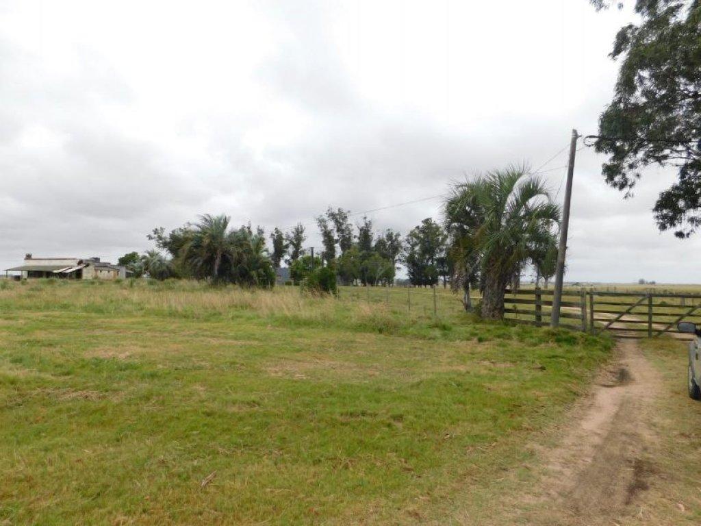 Campo Ref.759 - Campo en venta  ROCHA