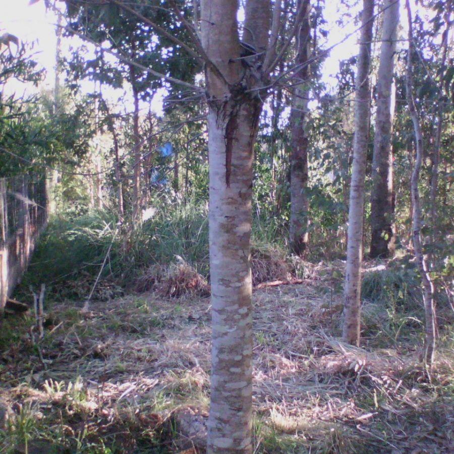 Terreno ID.297538 - Zona en desarrollo.