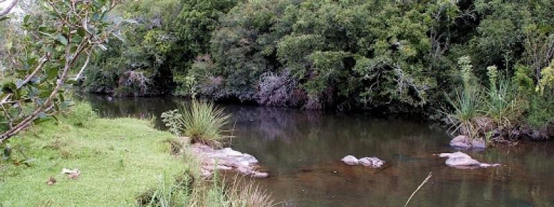 Campo con mucha agua, costa arroyo y Rio Cebollati, monte nativo, muy tranquilo y pintoresco