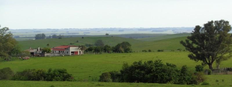 Campo en Venta en  Uruguay,  Excelente campo ganadero a 80 km de Punta del Este y 200 km de Montevideo