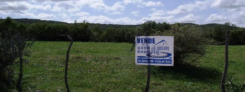 CAMPO EN URUGUAY , GARZON
