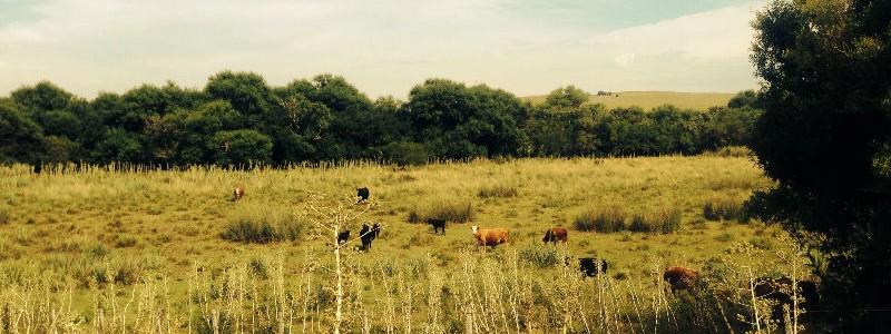 Campo en Venta en Uruguay, Lavalleja sobre Ruta 8, apto para ganadería, con arroyo y casa a reciclar