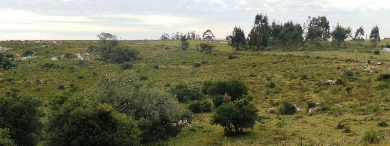 Chacra en Venta Uruguay, Ruta 12 a 24 km de Pueblo Edén