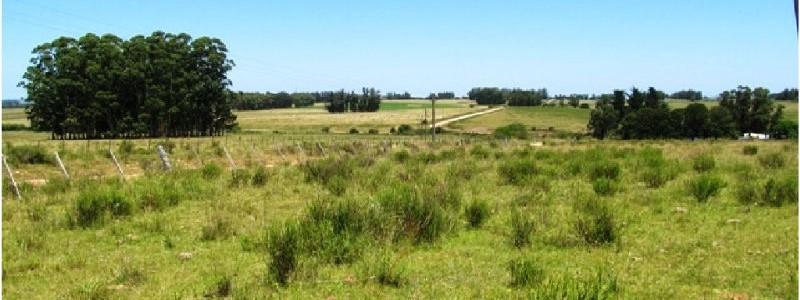 Chacra en Uruguay, a 33 km de Punta del Este, venta de chacra con casa.